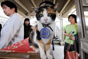 Кошка станционный смотритель продолжает писать в Твиттер после смерти