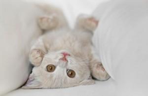 Милые котята - мимиметр зашкаливает!